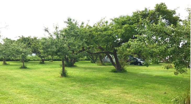 camping in het fruit beemster
