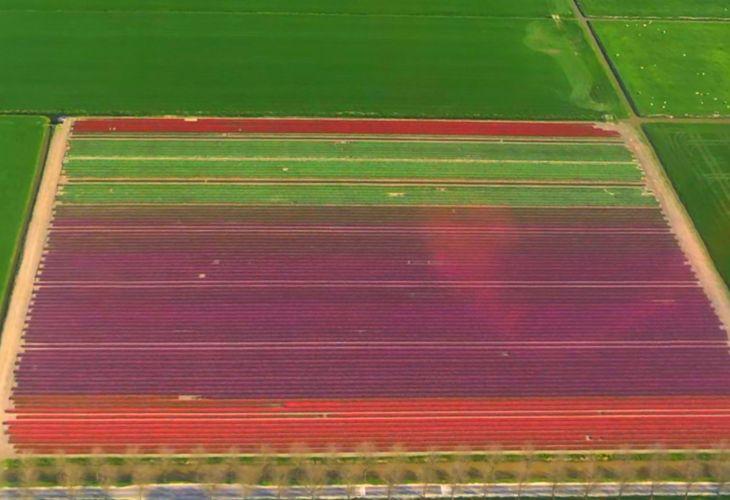 helikoptervluchten noord holland