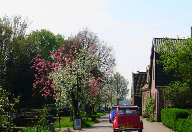 tulpen in de beemster